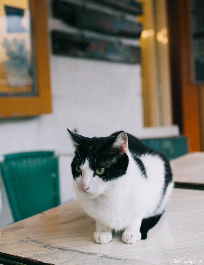 Làng mèo Houtong – Cat Village