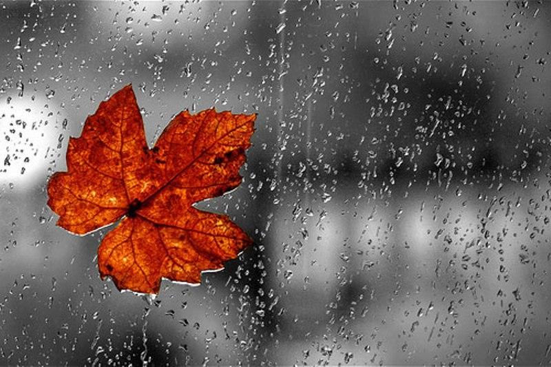 Hà Nội - những cơn mưa bất chợt
