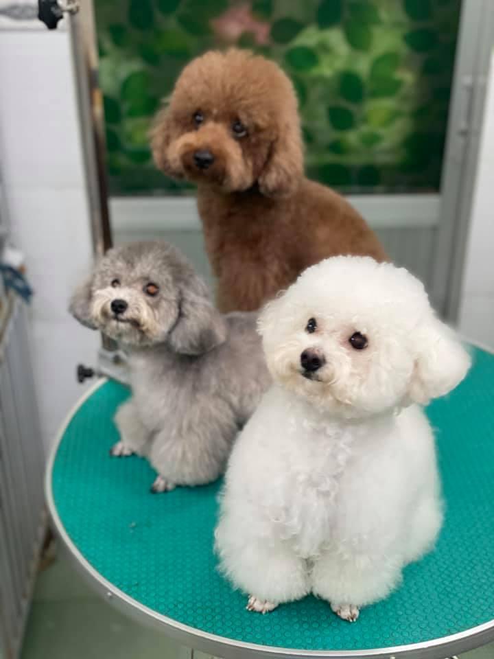 Top 9 Dịch vụ cắt tỉa lông thú cưng uy tín nhất tại TP. Nha Trang
