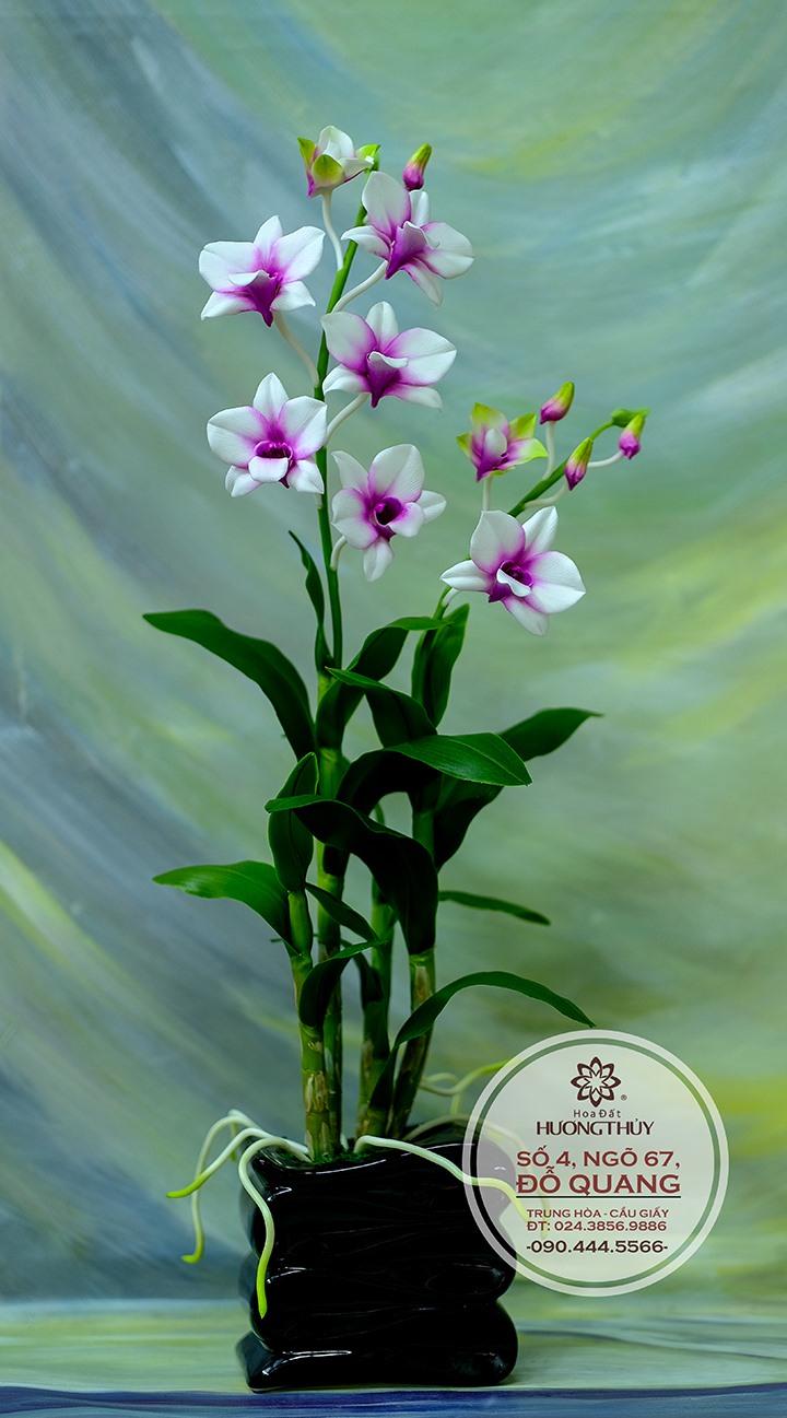Sản phẩm của hoa đất Hương Thủy