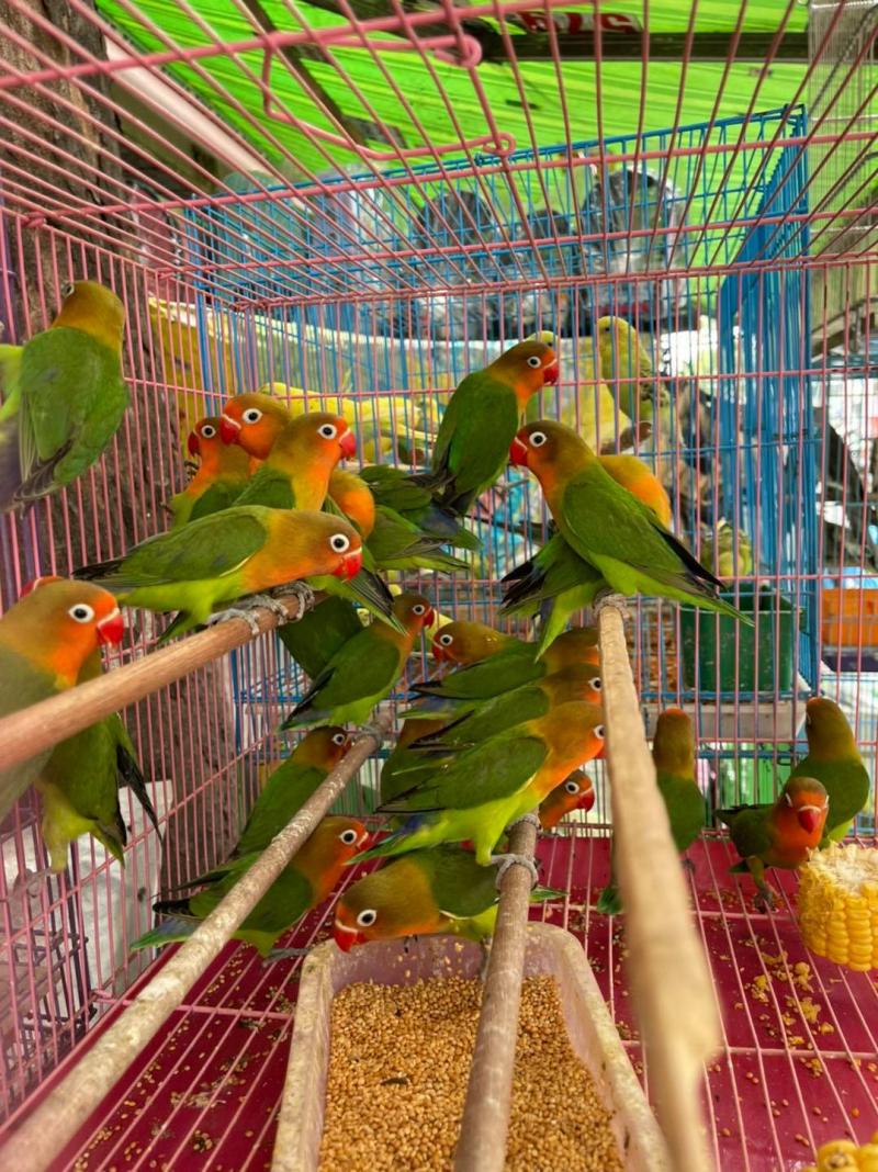 Tiệm Chim Cảnh Phượng Sài Gòn