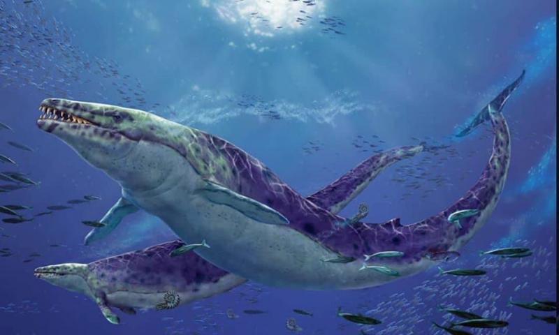 Vua bò sát Basilosaurus