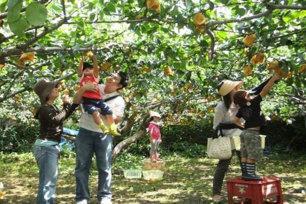 Vườn trái cây Ba Nhúng