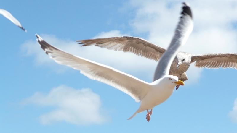 Top 10 Loài chim lớn nhất thế giới có thể bạn chưa biết