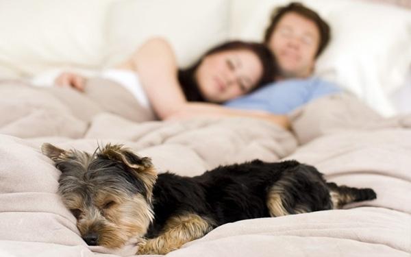 Top 10 Thứ tuyệt đối không được để trên giường ngủ