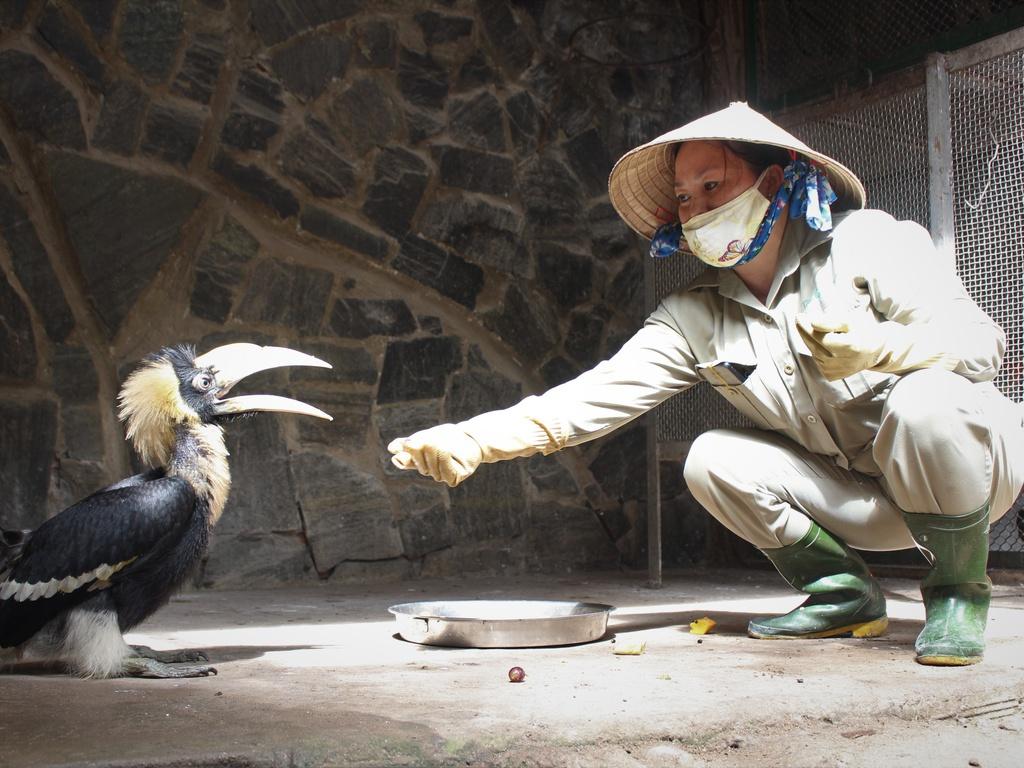 Giám đốc Thảo Cầm Viên Sài Gòn cảm kích cộng đồng mạng khi kêu gọi bữa ăn cho bầy thú