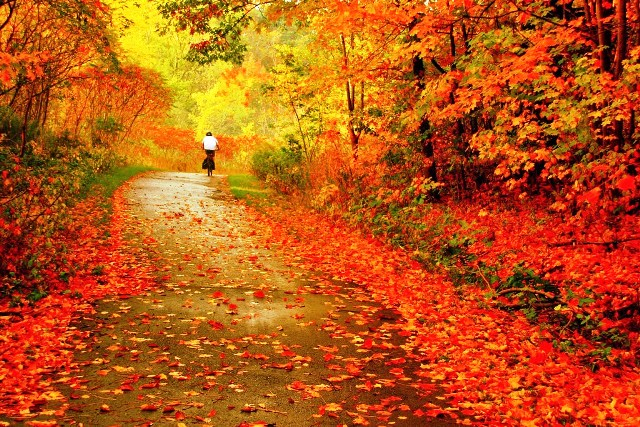 Top 10 Bài thơ hay về tháng 10