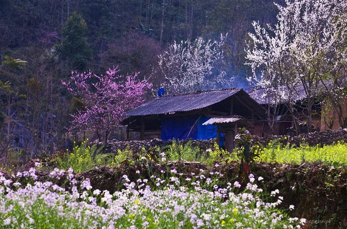 Top 10 Bài văn tả cảnh một buổi sáng mùa xuân hay nhất