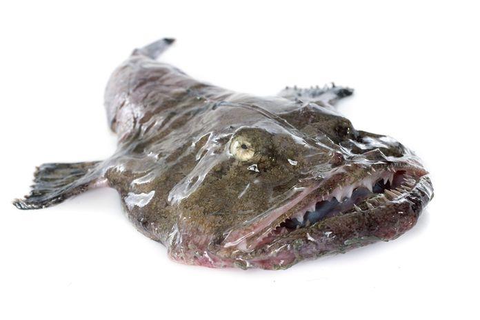 Cá nhám