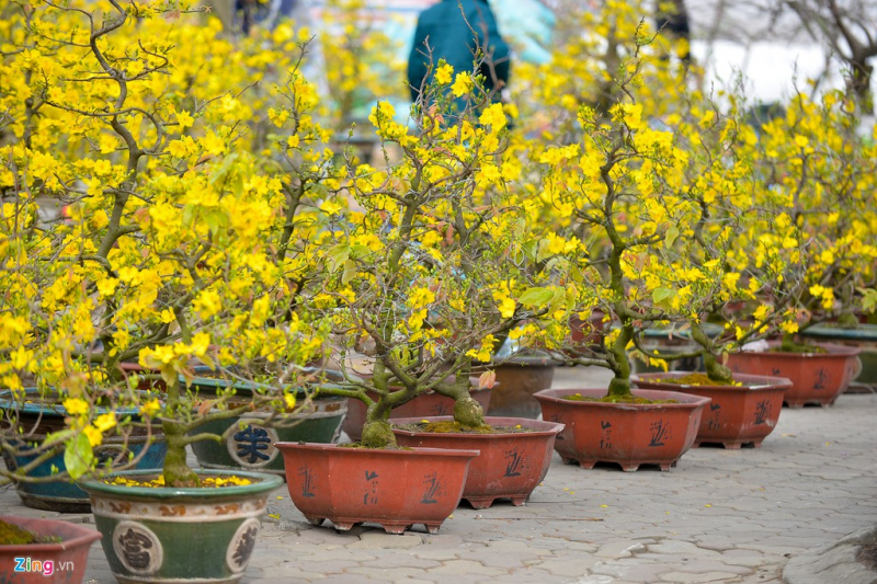 Bài văn tả cảnh chợ hoa ngày tết quê em số 3