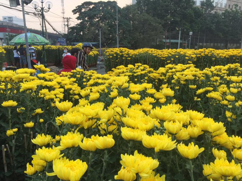 Bài văn tả cảnh chợ hoa ngày tết quê em số 9
