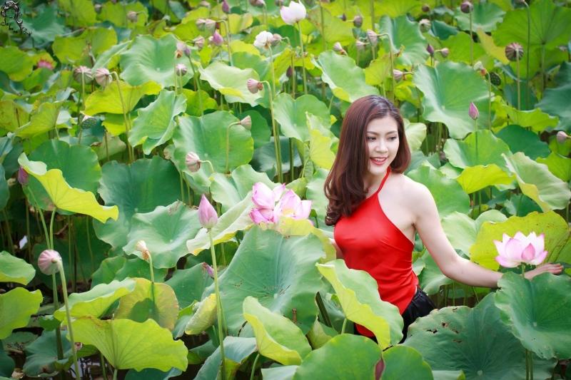 Top 8 đầm sen đẹp nhất Việt Nam thích hợp để chụp ảnh