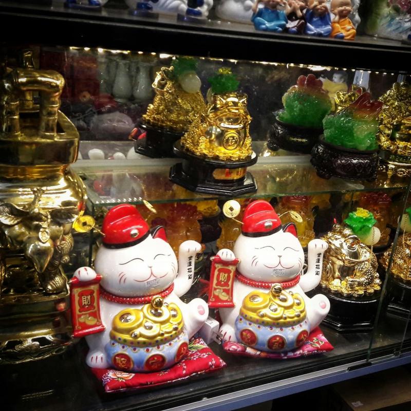 Top 3 Địa chỉ mua mèo thần tài uy tín, chất lượng nhất tỉnh Quảng Nam