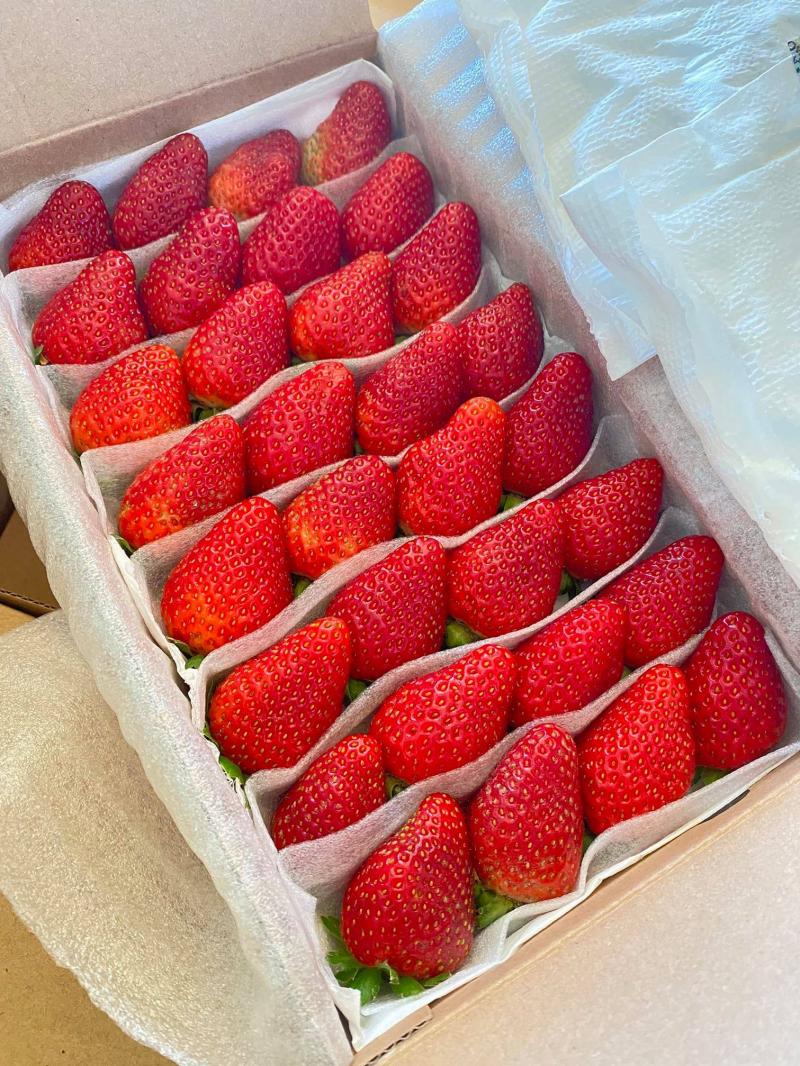 App hoa quả F99 để bà con có thể tận dụng được công sức và thời gian khi không cần phải vất vả ra ngoài bất kể nắng mưa mà vẫn có thể mua được những sản phẩm hoa quả hàng nhập khẩu chất lượng nhất.