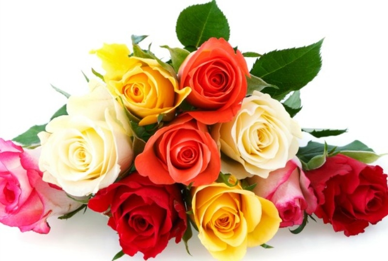 Top 15 Loài hoa lãng mạn gắn liền với tình yêu