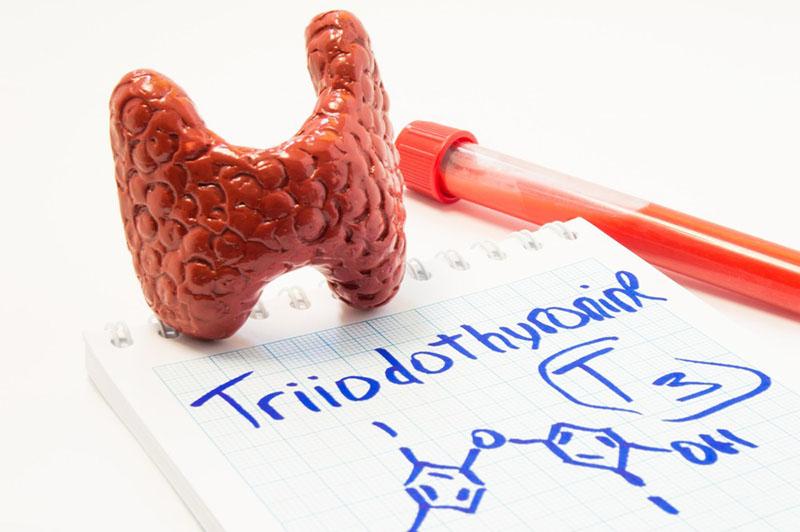 Top 9 Loại hormone gây tăng cân và cách phòng tránh