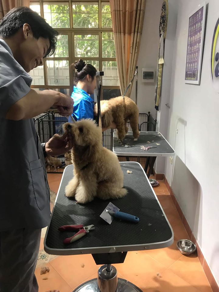 VietDuc Pets Centre