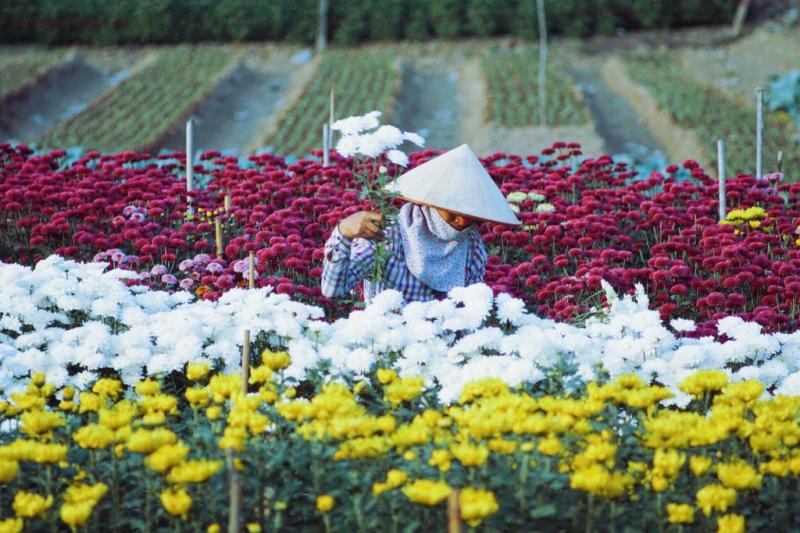 Làng hoa Hạ Lũng - Hải Phòng