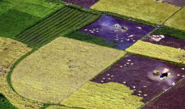 Ngắm những cánh đồng đầy màu sắc