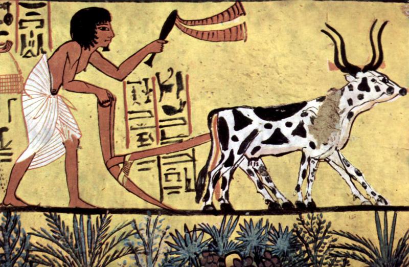Khoảng năm 15.000 TCN (cách đây khoảng 17.000 năm), quá trình thuần hóa động vật bắt đầu diễn ra