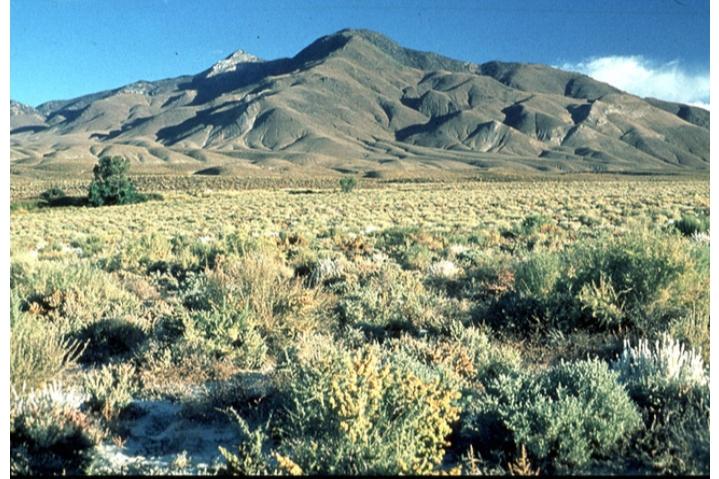 Sa mạc Great Basin