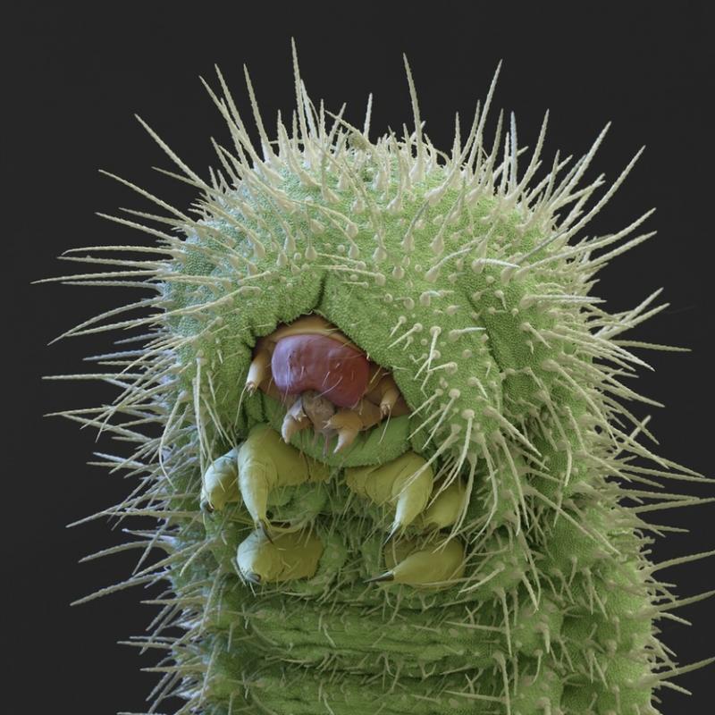 Top 8 Sinh vật kinh dị nhất hành tinh dưới kính hiển vi
