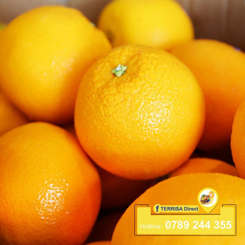 TERRISA Direct chuyên cung cấp trái cây nhập khẩu cao cấp, nguồn gốc xuất xứ rõ ràng từ các nhà vườn danh tiếng nhất trên Thế Giới