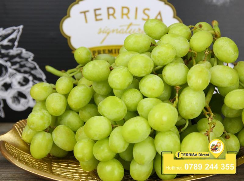 TERRISA Direct cung cấp những sản phẩm tươi mới nhất, đảm bảo không chất độc hại