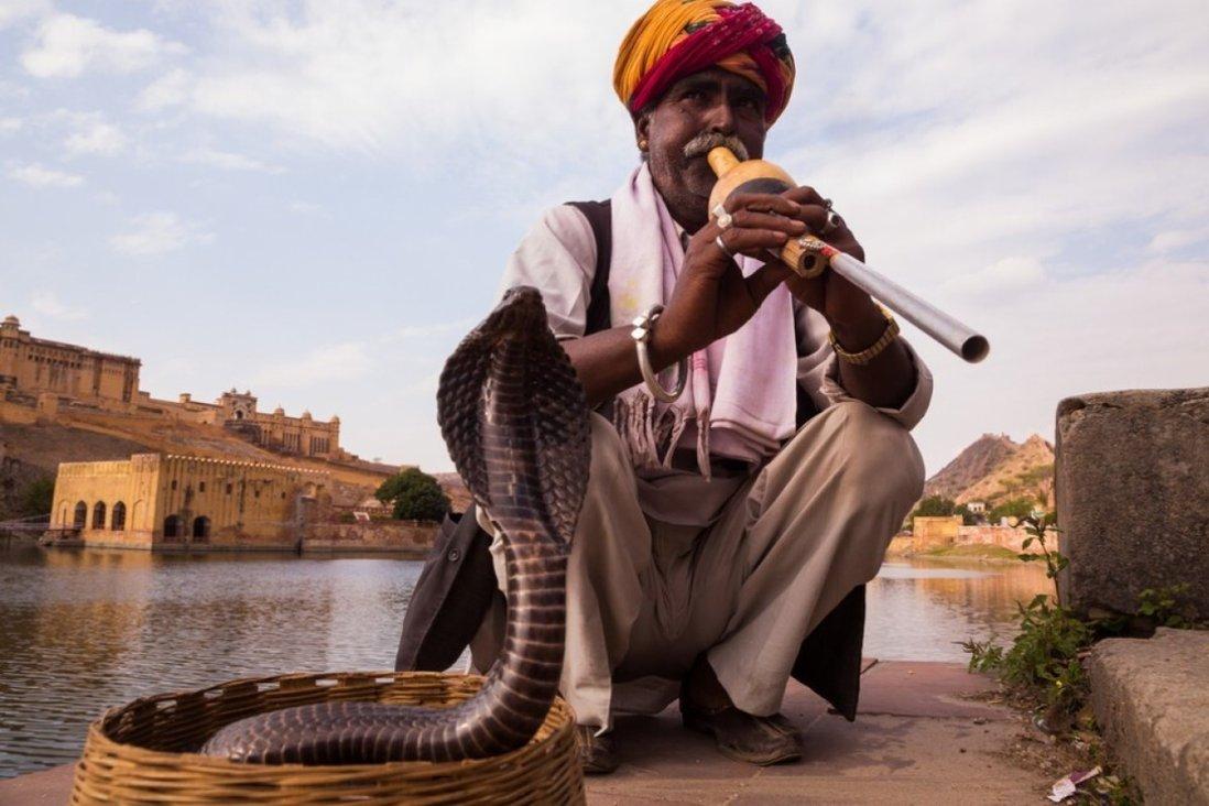 Rắn độc: Vũ khí mới của những kẻ giết người máu lạnh ở Ấn Độ