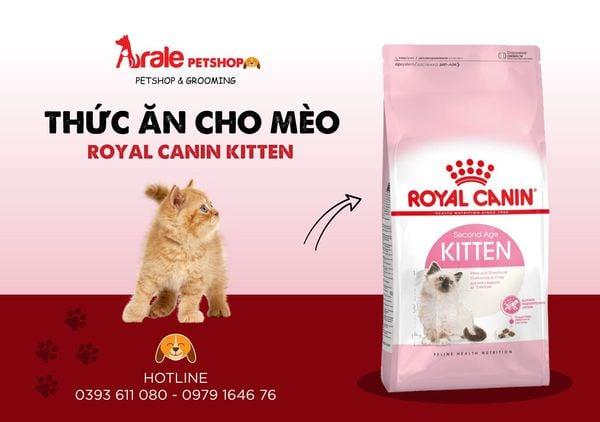 Top 3 Dịch vụ spa thú cưng tốt nhất tại quận Gò Vấp, TP. HCM
