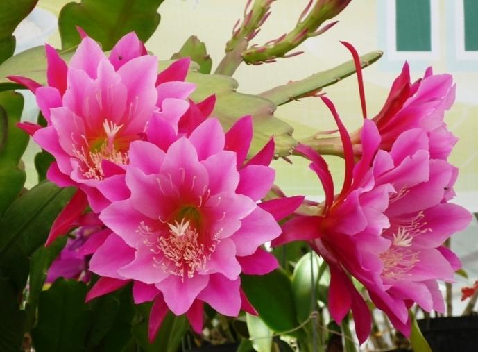 Top 10 Loài cây, hoa vừa trang trí nội thất vừa đuổi muỗi hiệu quả