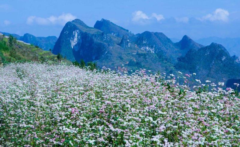 Những bông hoa nhỏ xíu được trồng nhiều bên triền núi