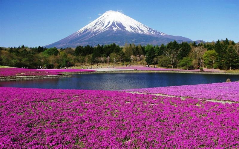 Top 10 Địa điểm du lịch thú vị nhất ở Nhật Bản