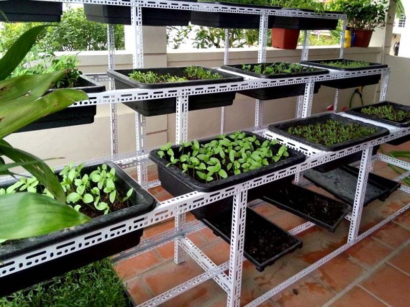 Top 4 Dịch vụ trồng rau sạch tại nhà ở Đà Nẵng uy tín nhất
