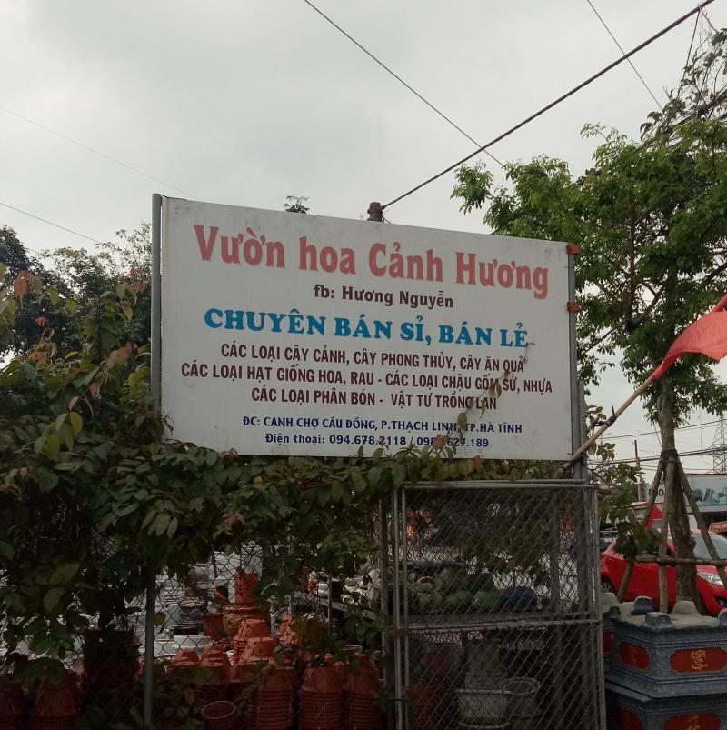 Top 5 địa chỉ bán cây cảnh uy tín nhất tại TP Hà Tĩnh