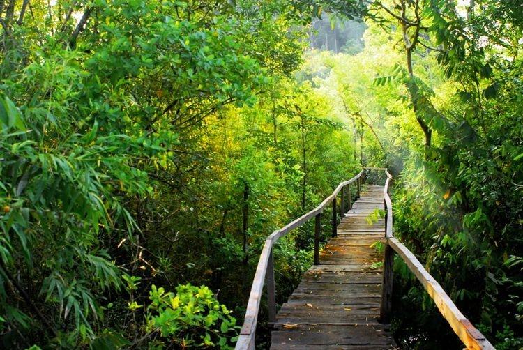 Top 10 Vườn Quốc gia Việt Nam bạn phải ghé thăm một lần trong đời